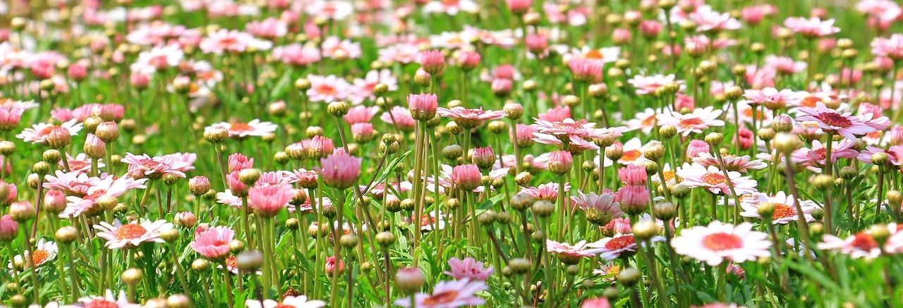 Eine Blumenwiese
